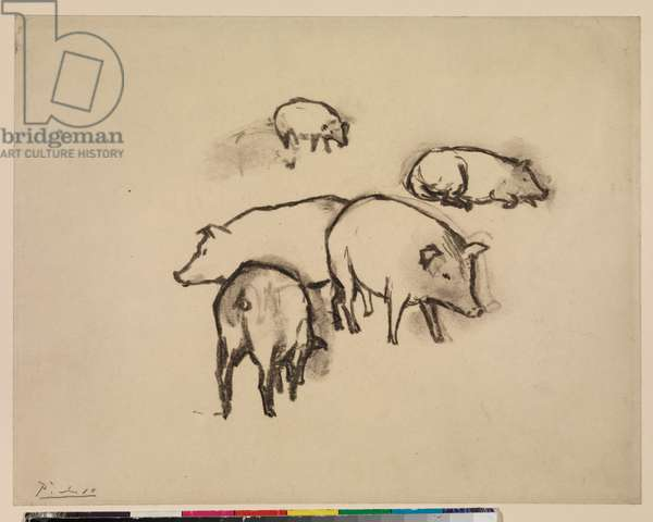 Pigs, c.1906 (oiled charcoal on paper)