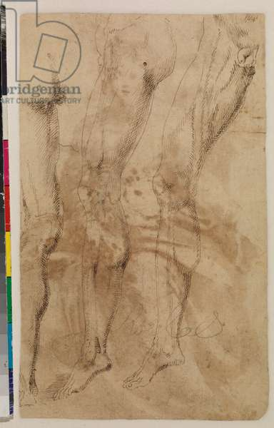 Three studies of a male leg (verso) c.1537 (pen and brown ink on laid paper) [see 5948317]