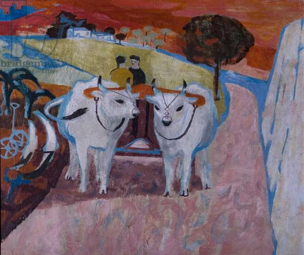 Oxen in Tuscany, 1956 (oil on canvas)