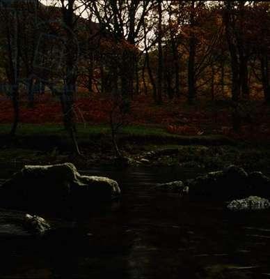 Derwent Forest and Water (photo)