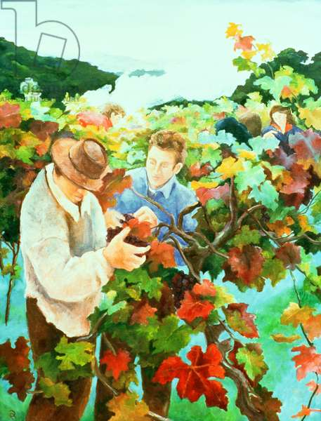 Grape Pickers, 1996