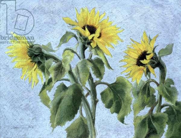 Sunflowers, 1996 (pastel)