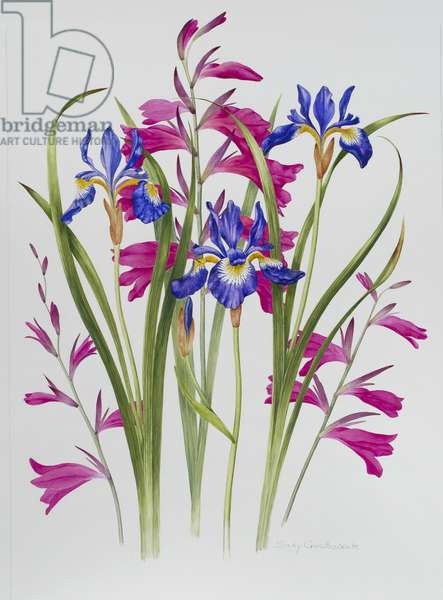 Gladiolus and Iris Sibirica (w/c on paper)