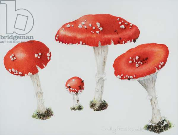 Red Toadstools Fly Agaric (w/c on paper)