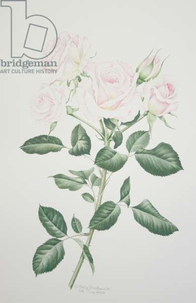 Rosa Belmonte (w/c on paper)