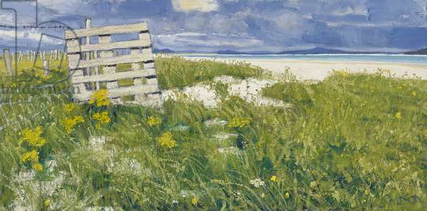 North Uist Grasses, 2013 (oil on canvas)
