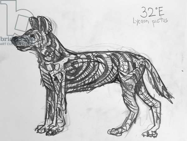 32E African Wild Dog, 2009, (graphite on paper)