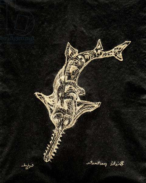 (80.15 W) Smalltooth Sawfish, 2010 (carbon paper drawing)