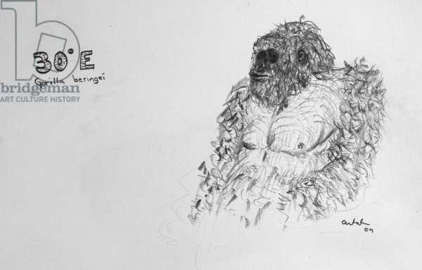 30E Eastern Gorilla, 2009, (graphite on paper)