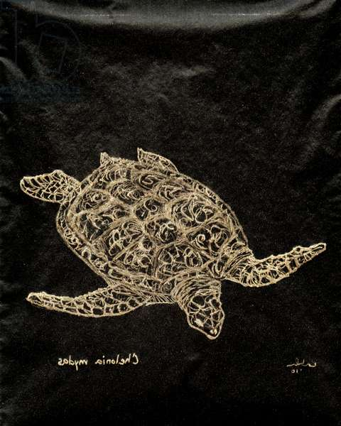 (80.15 W) Green Sea Turtle, 2010 (carbon paper drawing)