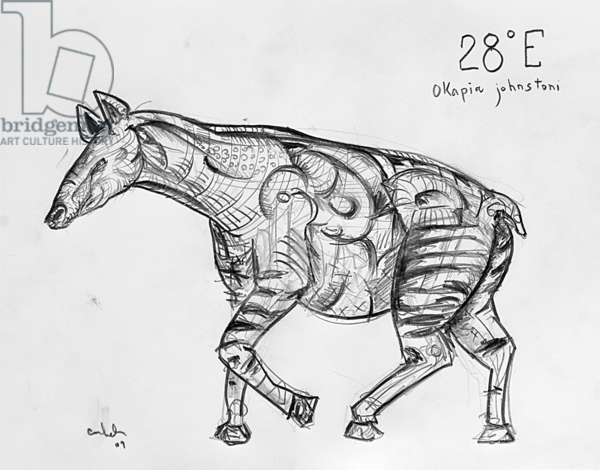 28E Okapi, 2009, (graphite on paper)