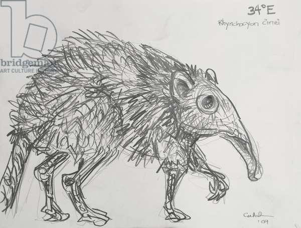34E Checkered Elephant Shrew, 2009, (graphite on paper)