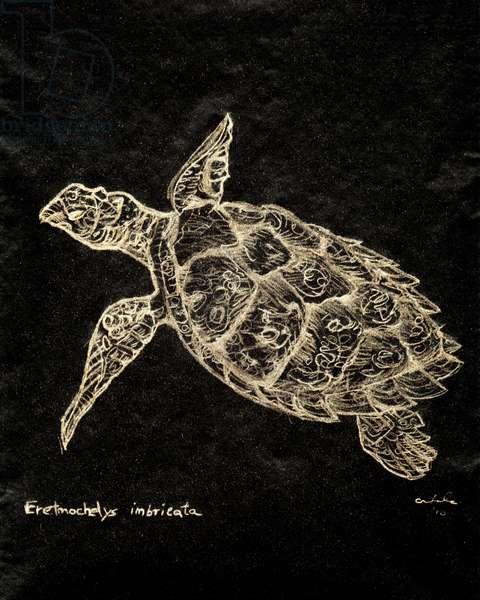 (80.15 W) Hawksbill Sea Turtle, 2010 (carbon paper drawing)