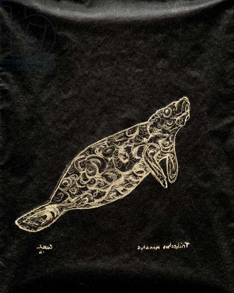 (80.15 W) West Indian Manatee, 2010 (carbon paper drawing)