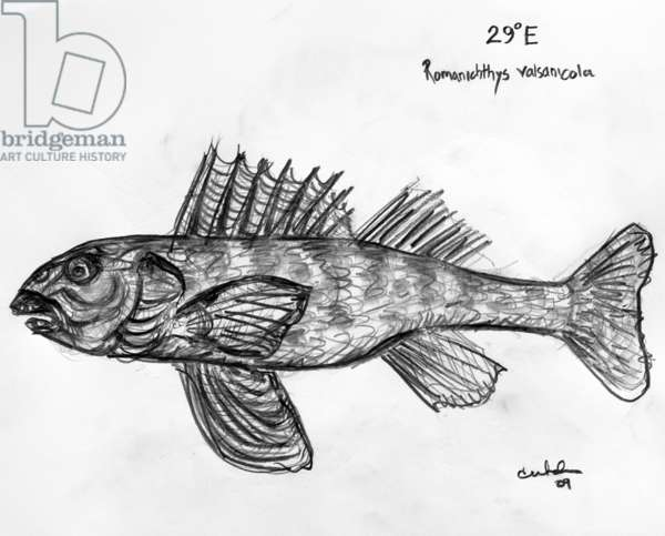 29E Asprete, 2009, (graphite on paper)
