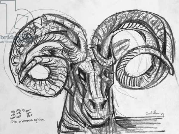 33E Cyprian Wild Sheep