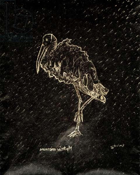 (80.15 W) Woodstork, 2010 (carbon paper drawing)