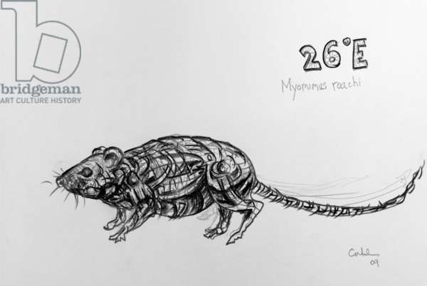 26E Mouse-Tailed Dormouse, 2009, (graphite on paper)