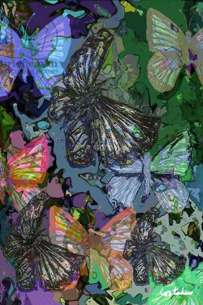 (Florida is...) Butterflies