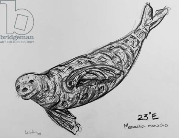 23E Mediterranean Monk Seal, 2009, (graphite on paper)