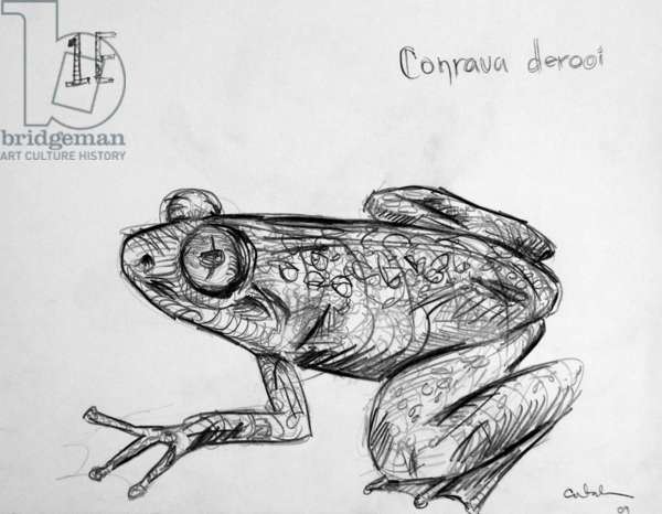 1E Togo Slippery Frog, 2009, (graphite on paper)