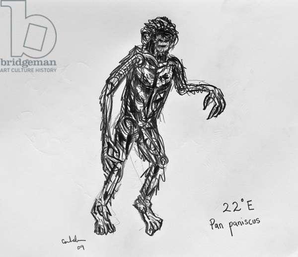 22E Bonobo, 2009, (graphite on paper)
