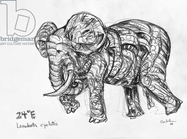 24E Forest Elephant, 2009, (graphite on paper)