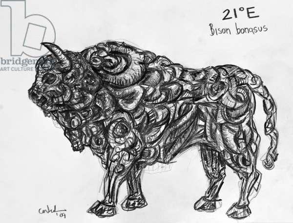 21E European Bison, 2009, (graphite on paper)
