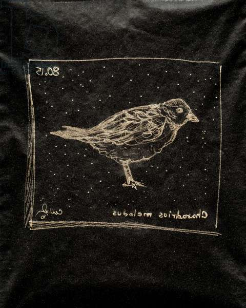 (80.15 W) Piping Plover, 2010 (carbon paper drawing)
