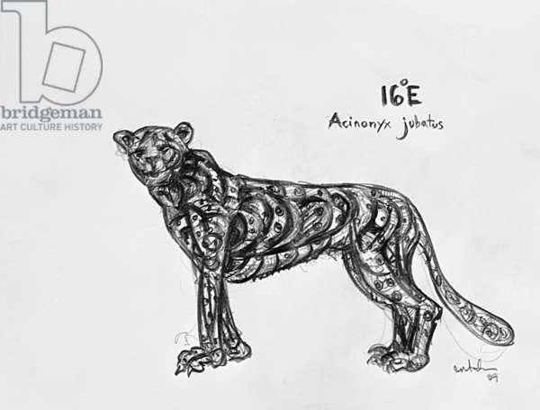 16E Cheetah, 2009, (graphite on paper)