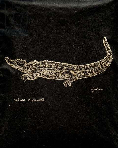 (80.15 W) American Crocodile, 2010 (carbon paper drawing)