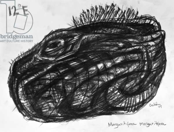 12E Freshwater Pearl Mussel, 2009, (graphite on paper)