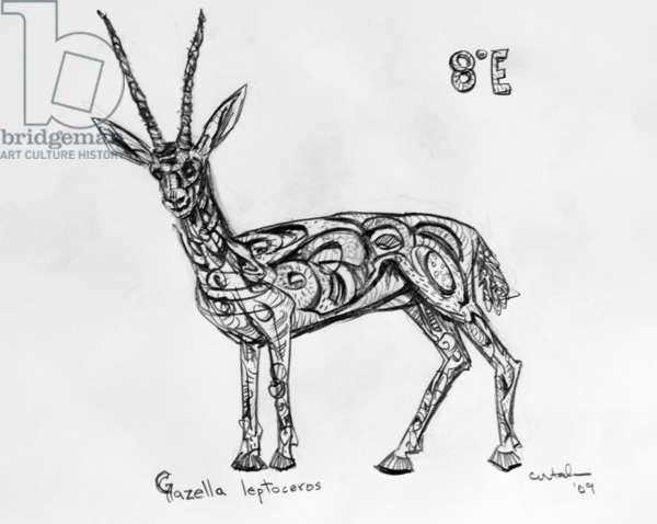 8E Slender-Horned Gazelle, 2009, (graphite on paper)