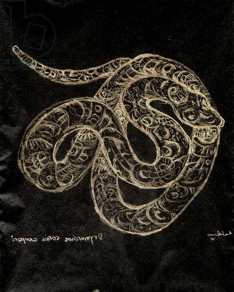 (80.15 W) Eastern Indigo Snake, 2010 (carbon paper drawing)