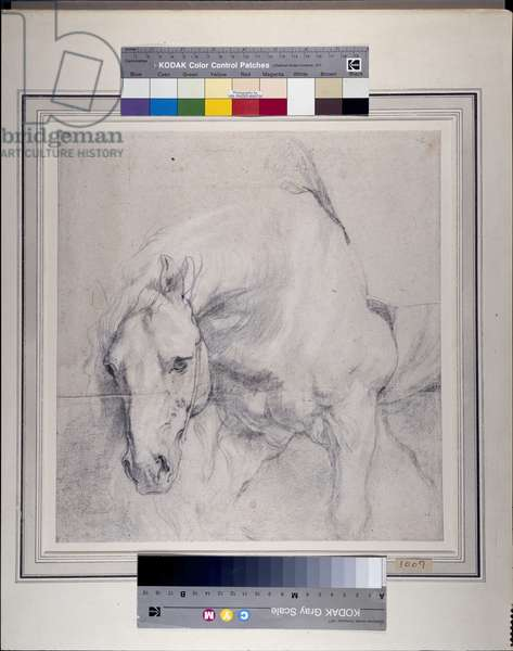 Head and Forequarters of a gray horse (black chalk heightened with white on paper)