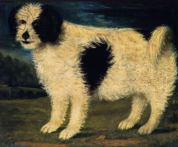 Black and White Dog (oil on canvas)