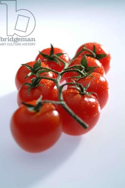 Tomato cluster