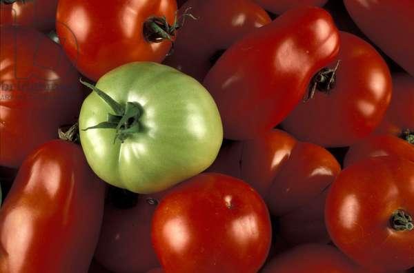 Tomatoes, Italy