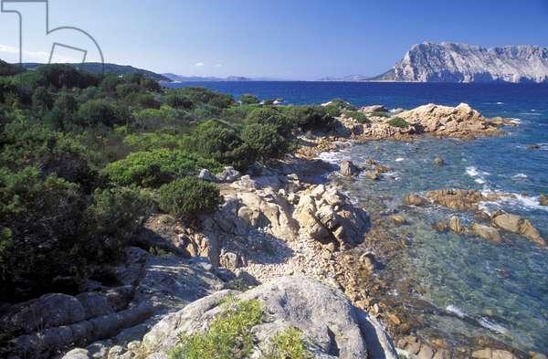 Mediterranean maquis, Sardinia, Italy