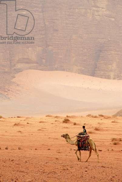 Dromedary Bedouins, Wadi Rum, Jordan, Middle East