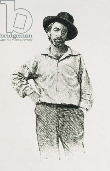 Whitman, Walt (1819-1892). Portrait of Walt Whitman aged 36 years old. Engraving.