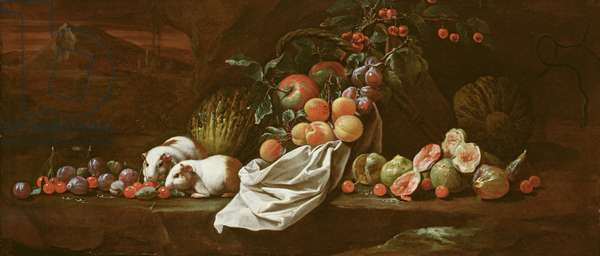 Still Life with Figs, Cherries, Plums and Two Guinea Pigs, c.1685 (oil on canvas)