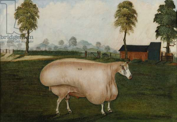 White Ram, 1846 (oil on canvas)