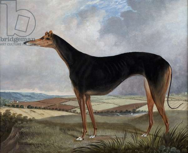 Greyhound, 1837 (oil on canvas)