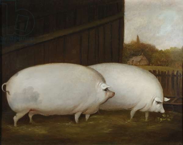 A Pair of Pigs, c.1850 (oil on canvas)