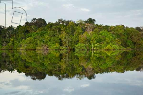 Amazonia, 2015 (photo)