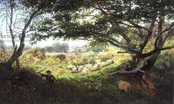 A Shepherd Boy and Flock of Sheep