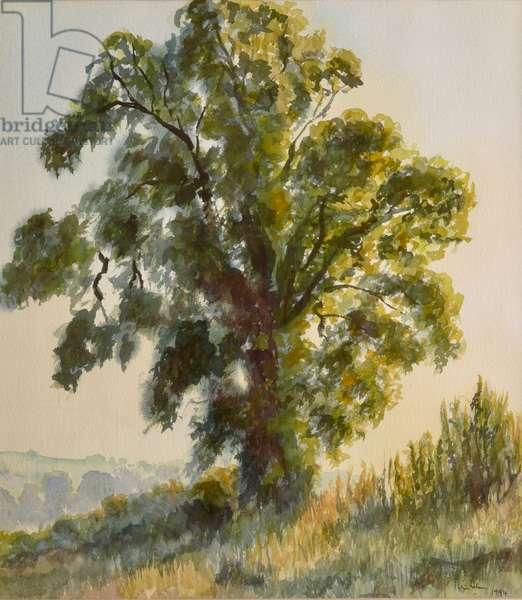 August Oak - Sunset, 1996 (w/c)