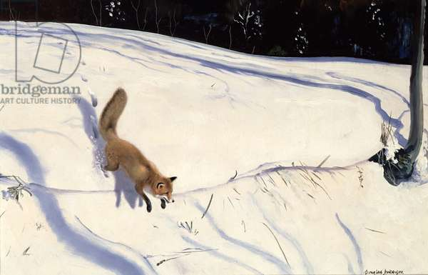 Fox leaping from a Snowy Bank