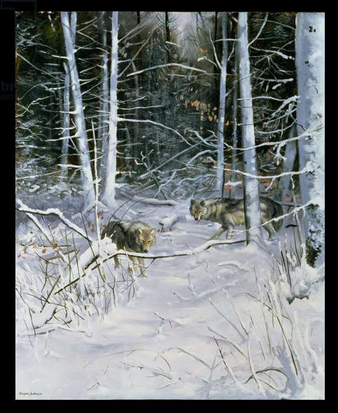 Wolves in a Snowy Forest